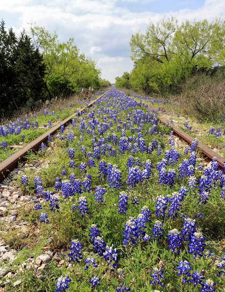 Tracking Bluebonnets