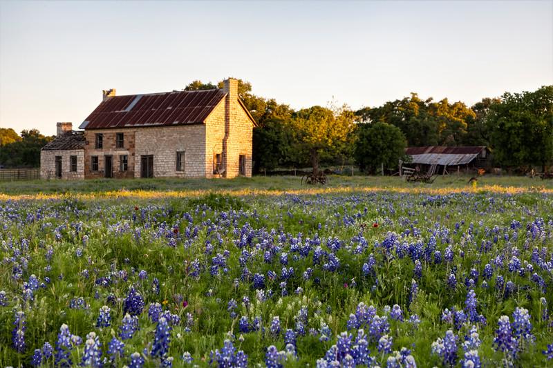 Texas Bluebonnet House 0419a