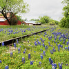 Bluebonnet Railroad 05