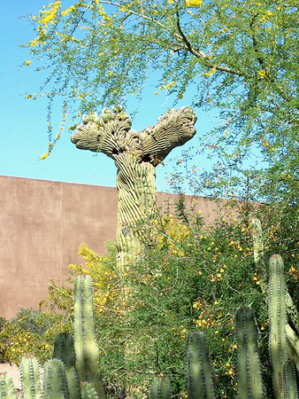 The Arizona-Sonora Desert Museum