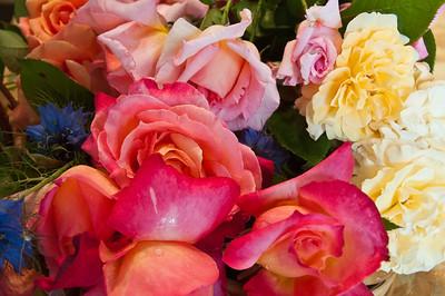 many-roses