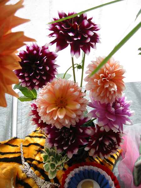 This was a nice bouquet of colors.<br /> I think this form of the flower is my favorite,<br /> although I do like them all.