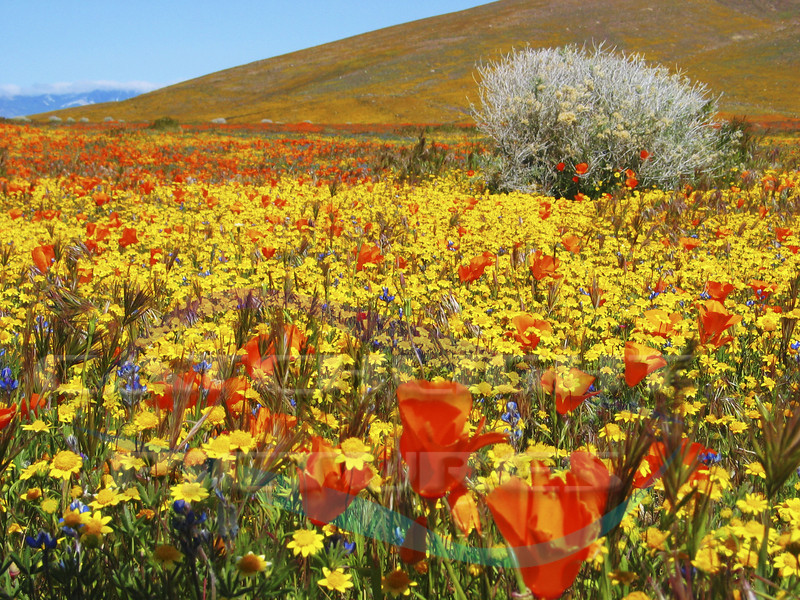 Near California Poppy Reserve, Lancaster