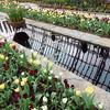 cst Sunken Garden