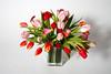 SPRING GARDEN - Tulips and Calla Lilies