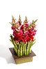 ORIENTAL GARDEN - Snapdragons and Asparagus