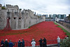 1,118,760 World War I poppies in the Tower of London moat