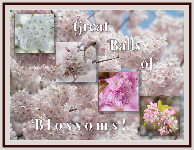 Great Balls of Blossoms!