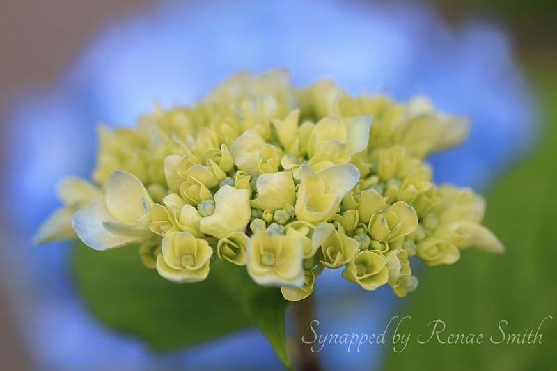 Fleured-on-Bleu