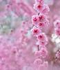 Springtime Extravaganza