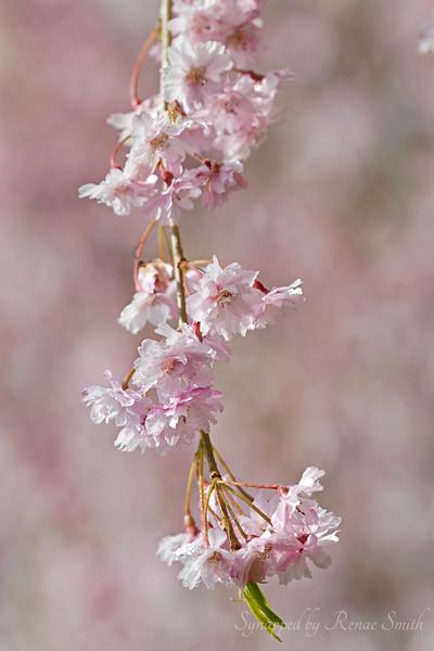 Spring in Full Swing