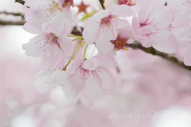 Spring's Silent Concerto