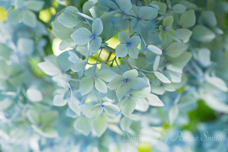 Watercolor Blues
