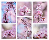 Bouquet o' Cherry Blossoms