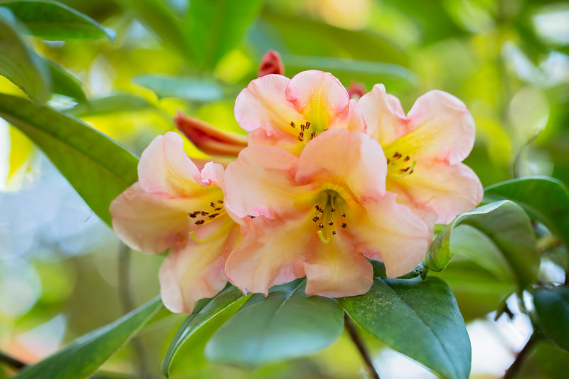 In Love with Rhodies