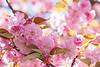 Reverie in Bloom