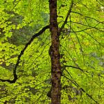 Backlit_Fall_Colors_in_Yosemite_2635