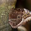 Butterfly Magic Tucson, AZ Tucson Botanical Gardens