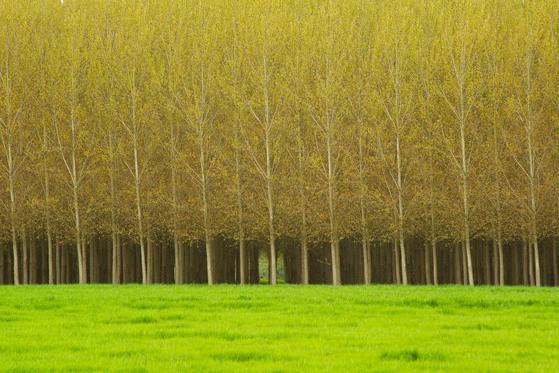 """Rows of Trees""  These rows of trees at a tree farm in Oregon really captured me.  The uniform lines and patterns in the trunks together with that little peak through to the back.  Makes you want to wander into the forest."