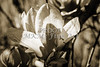 Tulip Tree Bloom Metal Art 1806.206