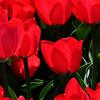 Yes, redder I think!