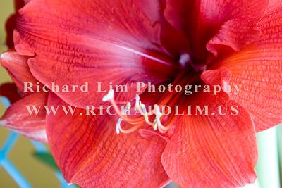 flower-0145