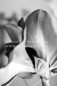 flower-0141