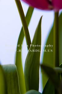 flower-0125