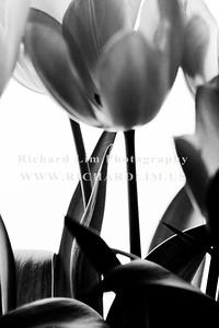 flower-0123
