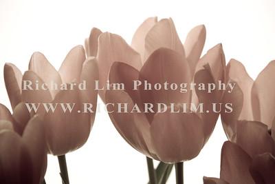 flower-0108