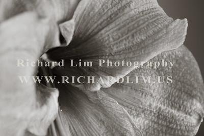 flower-0136
