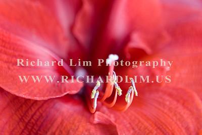 flower-0153
