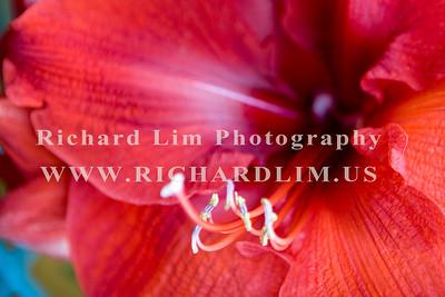 flower-0144