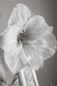 flower-0137