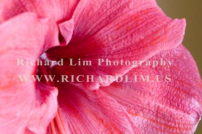 flower-0135