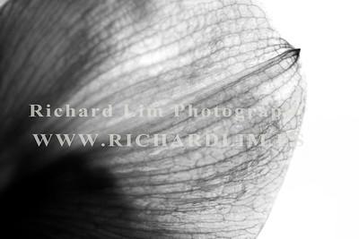 flower-0151