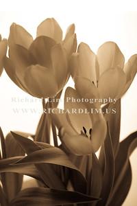 flower-0121