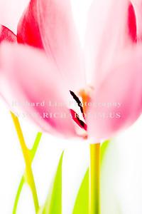 flower-0127