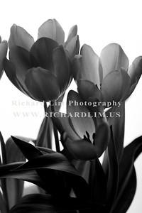 flower-0120
