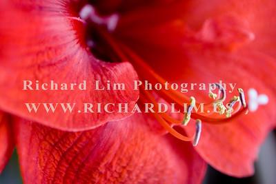 flower-0152