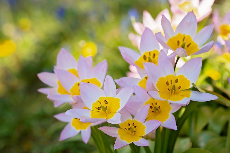 Social Tulips