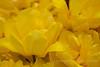 Buttered Lemon