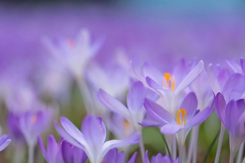 Spring Blurring My Mind