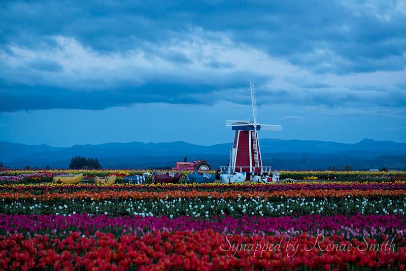 Blue Hour Tulip Rainbow (horizontal version)