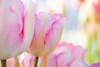 Blushing Secrets