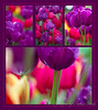 Varying Degrees of Purple -- Collage