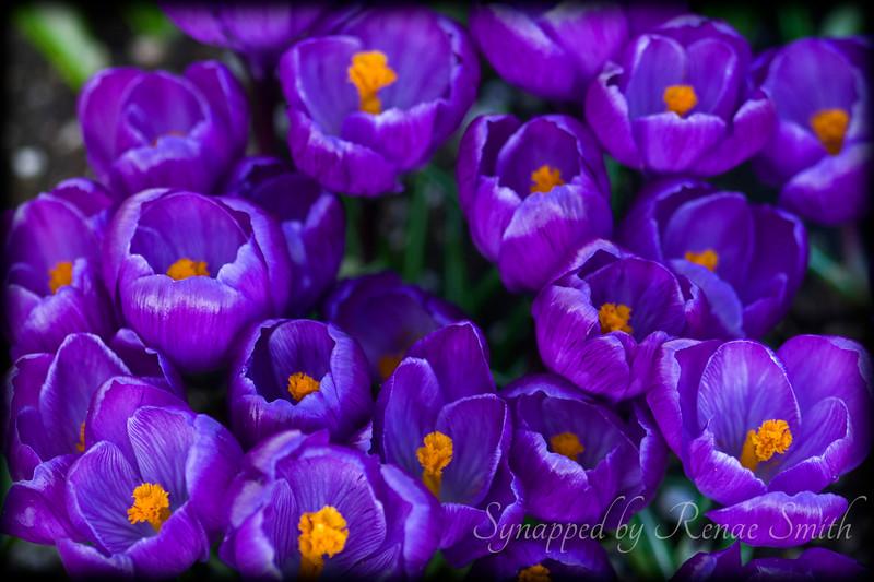 Garments of Silken Purple