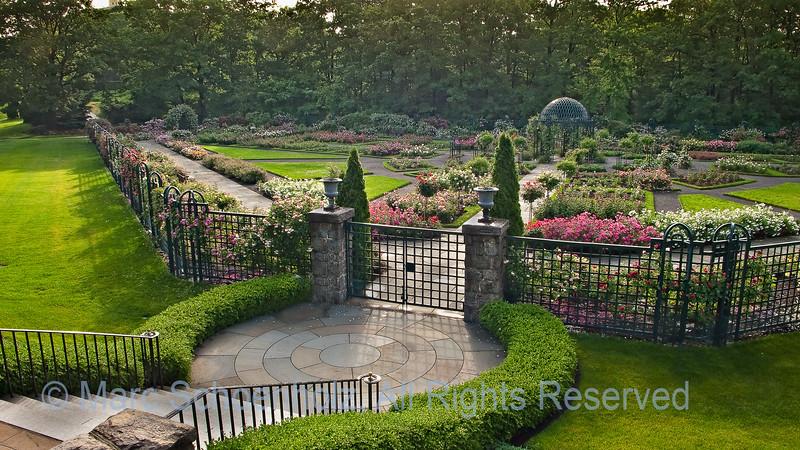 Rose Garden, Photographed at: New York Botanical Gardens, New York, NY. June, 2009  ©2009 Marc Schoenholz  Exposure and Camera Info Camera:  DMC-LX1 Lens: 6.3  Shutter Speed: 1/40,  Aperture: 8 ISO Setting: 80