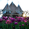 Lake Harriet Bandshell Tulips