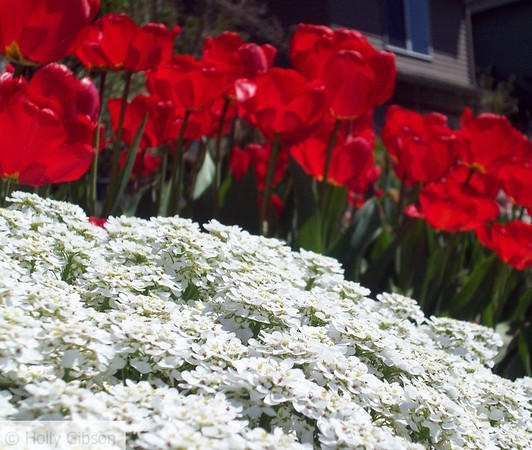 Red and White Medley - 21